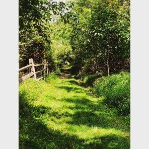 The Path by Alisha